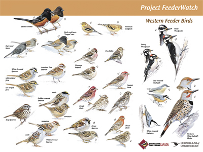 names of birds az